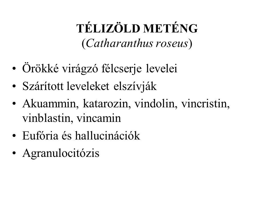 TÉLIZÖLD METÉNG (Catharanthus roseus)