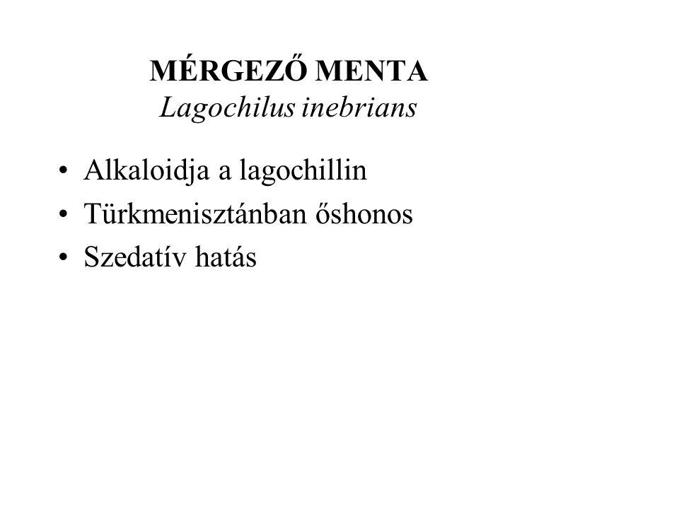 MÉRGEZŐ MENTA Lagochilus inebrians