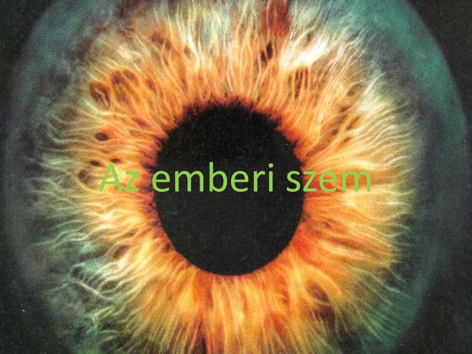 Az emberi szem http://egeszseg.origo.hu/swf/popup_anim1.html