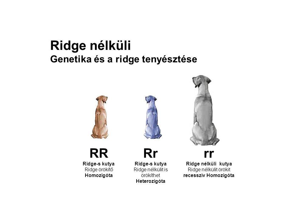 Ridge nélkülit is örökíthet Heterozigóta