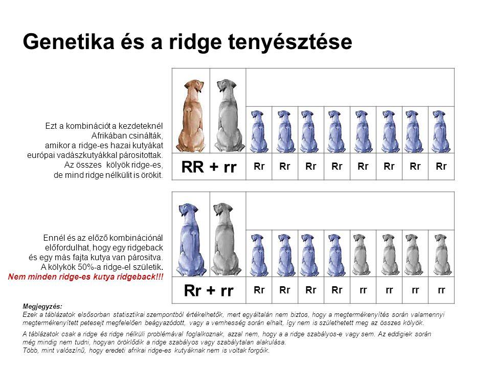 Genetika és a ridge tenyésztése