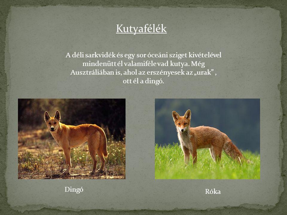 Kutyafélék