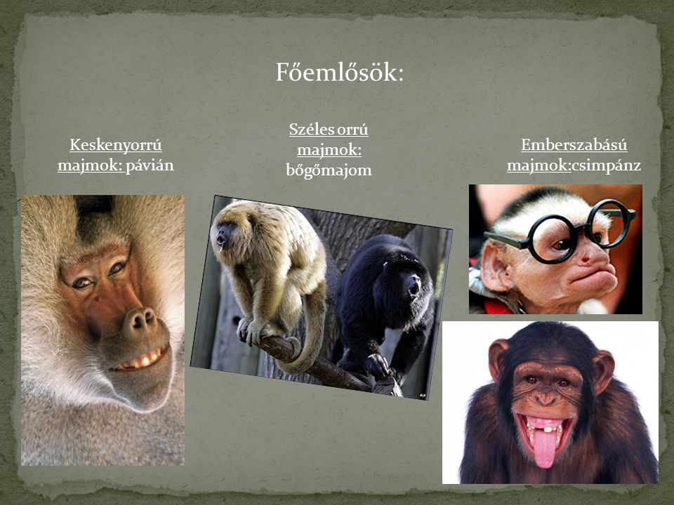 Főemlősök: Széles orrú majmok: bőgőmajom Keskenyorrú majmok: pávián