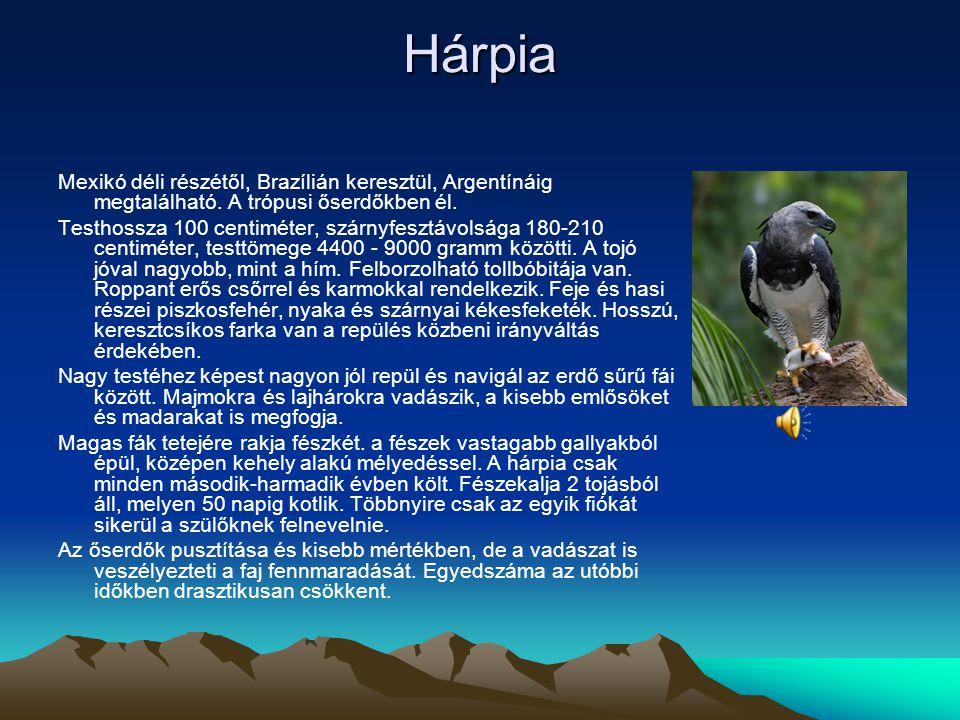 Hárpia Mexikó déli részétől, Brazílián keresztül, Argentínáig megtalálható. A trópusi őserdőkben él.