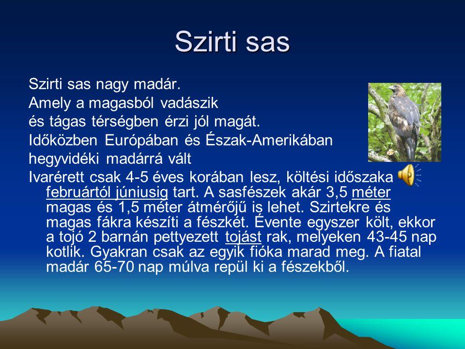 Szirti sas Szirti sas nagy madár. Amely a magasból vadászik