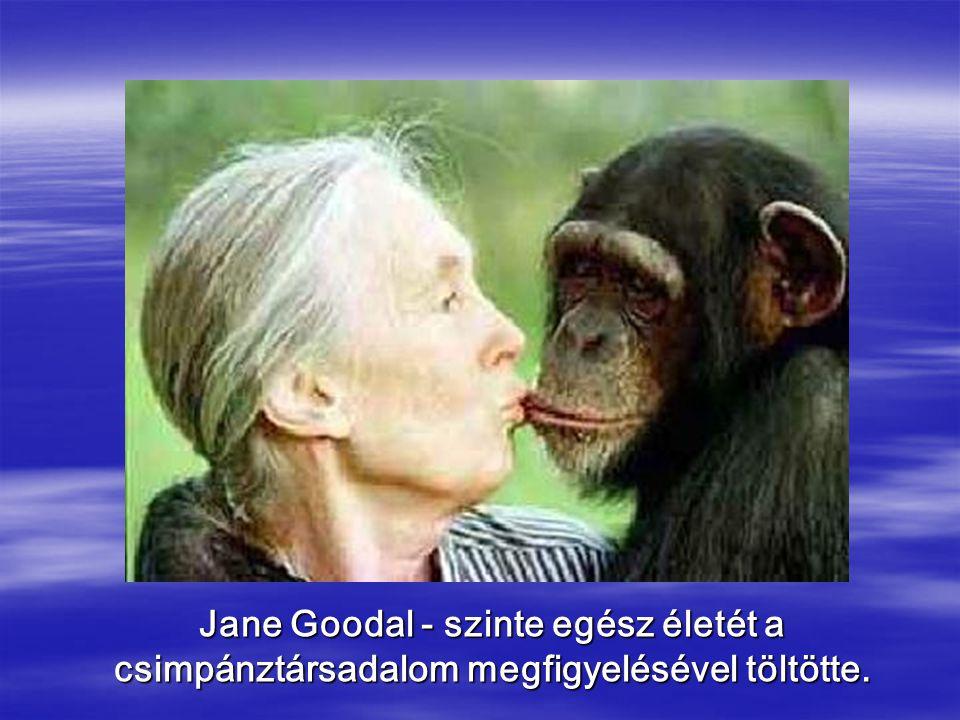 Jane Goodal - szinte egész életét a csimpánztársadalom megfigyelésével töltötte.