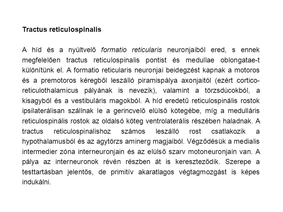 Tractus reticulospinalis