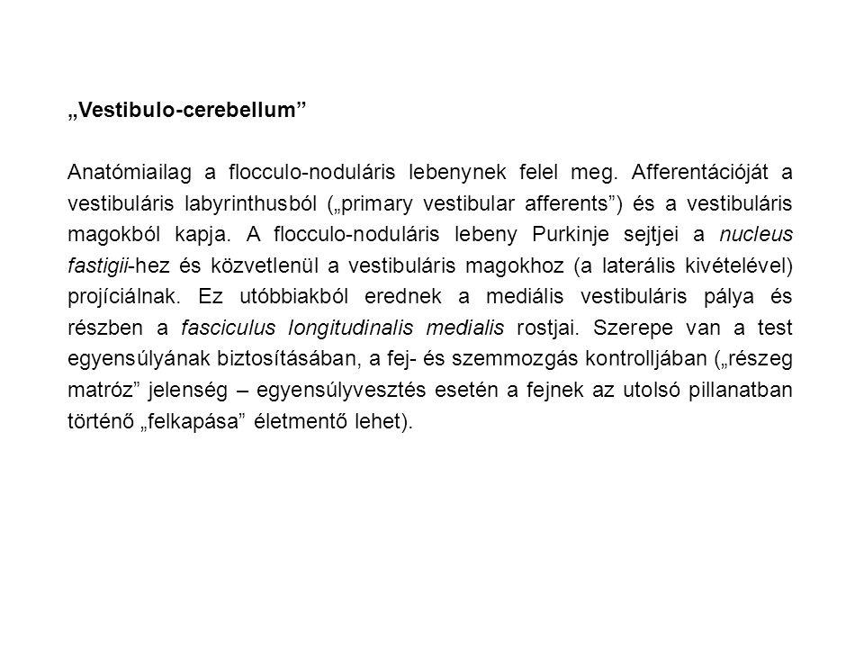 """""""Vestibulo-cerebellum"""