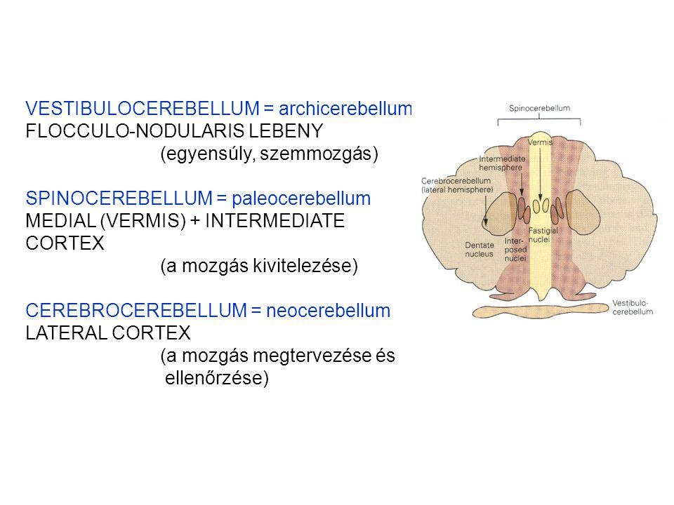 VESTIBULOCEREBELLUM = archicerebellum