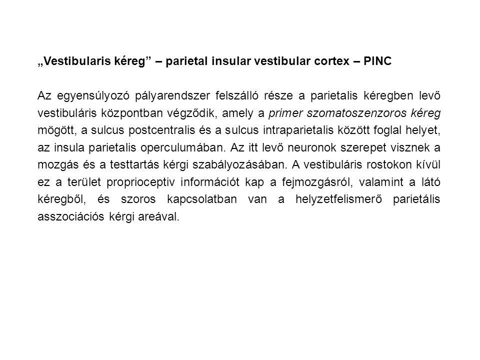 """Vestibularis kéreg – parietal insular vestibular cortex – PINC"