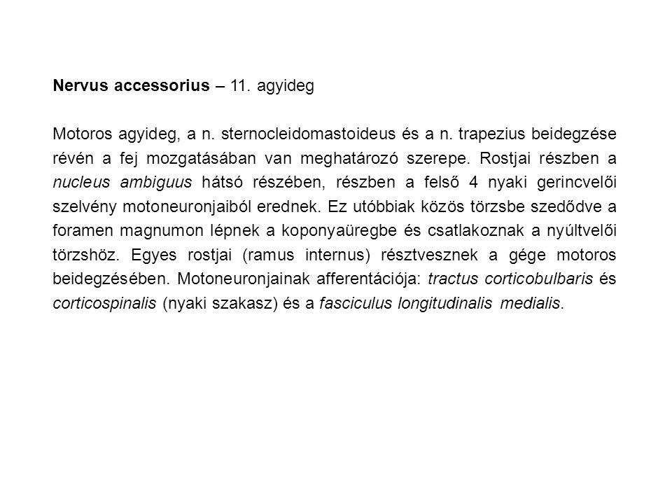 Nervus accessorius – 11. agyideg