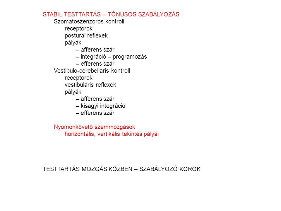 STABIL TESTTARTÁS – TÓNUSOS SZABÁLYOZÁS