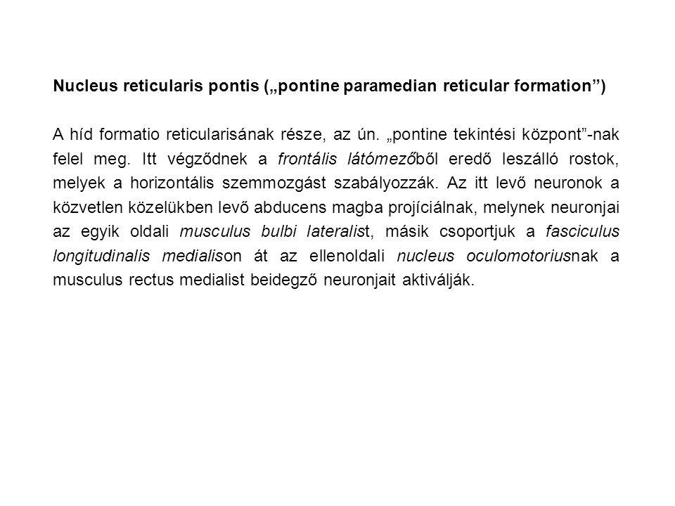 """Nucleus reticularis pontis (""""pontine paramedian reticular formation )"""