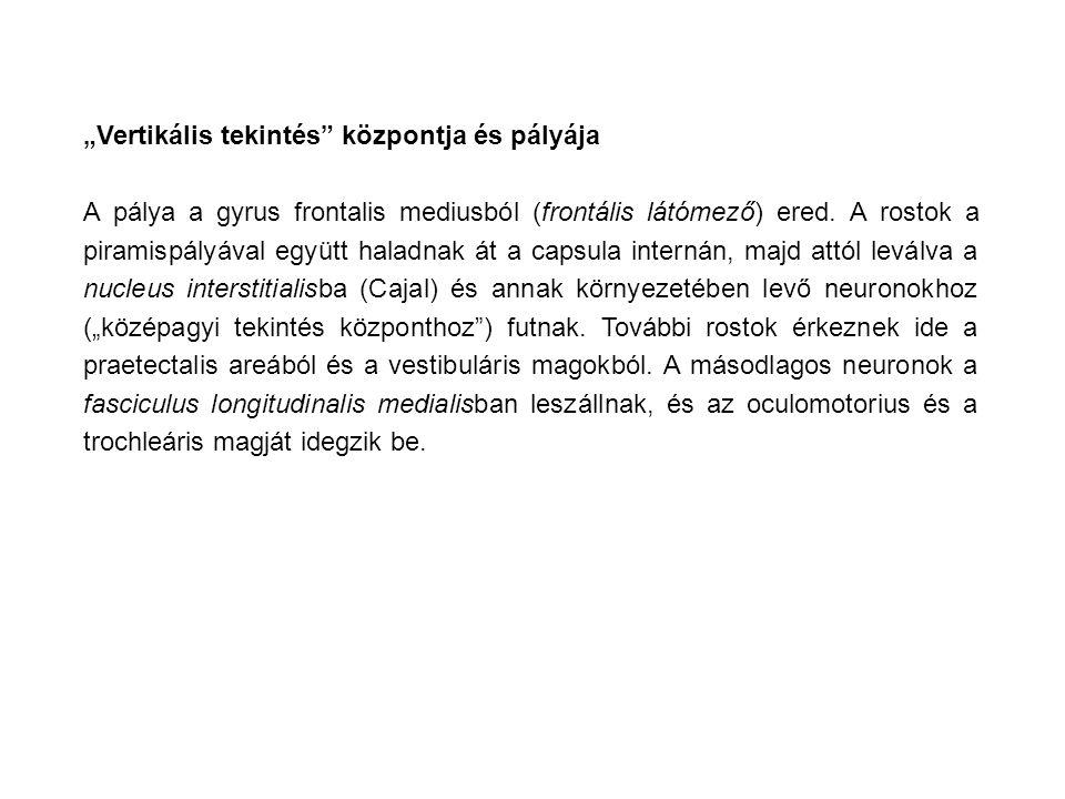 """""""Vertikális tekintés központja és pályája"""