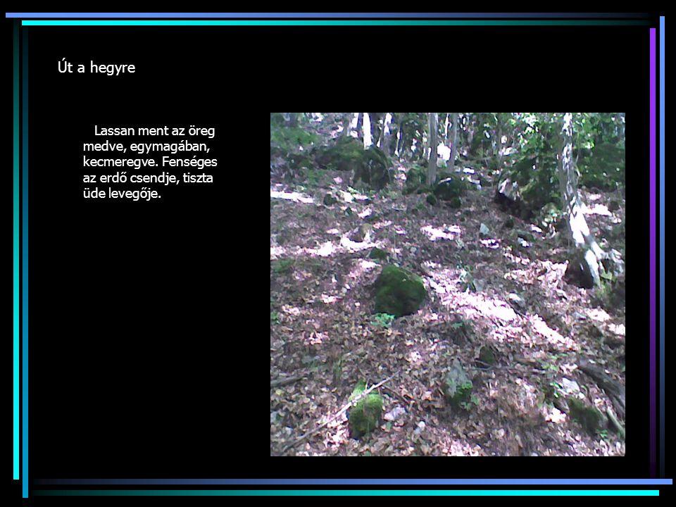 Út a hegyre Lassan ment az öreg medve, egymagában, kecmeregve.