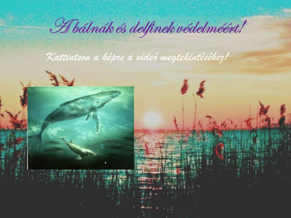 A bálnák és delfinek védelméért!