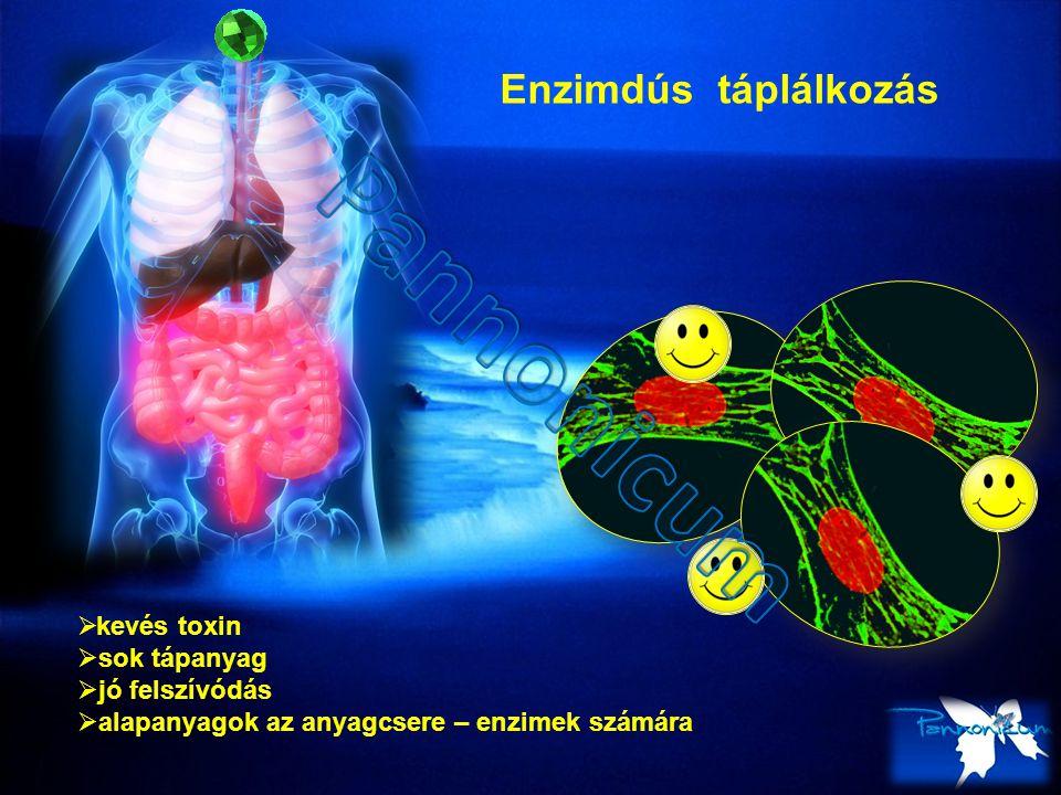 Pannonicum Enzimdús táplálkozás kevés toxin sok tápanyag