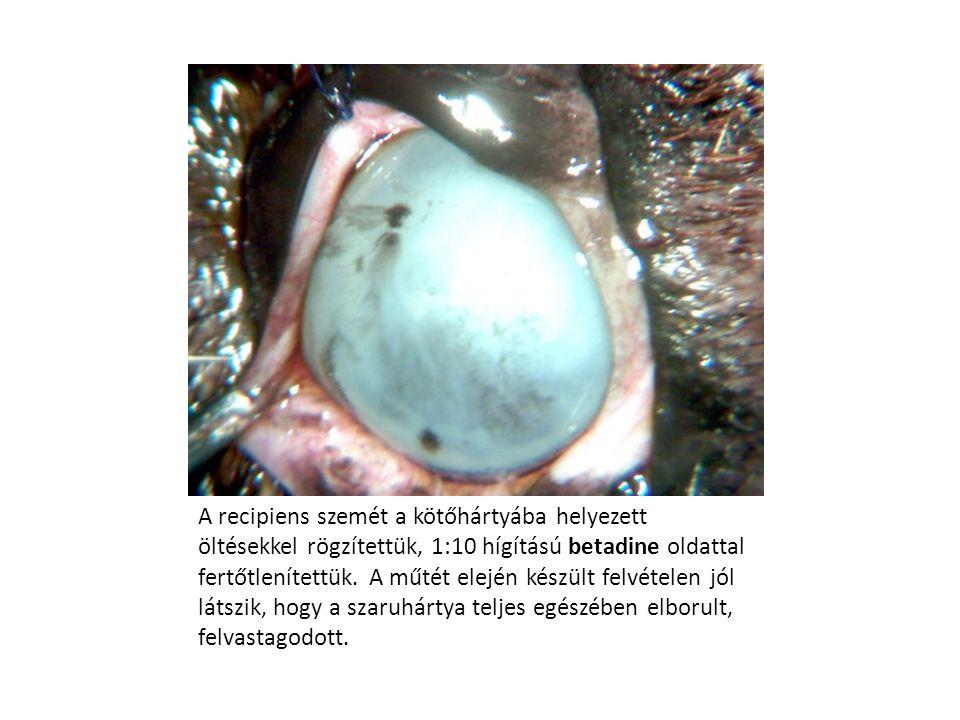 A recipiens szemét a kötőhártyába helyezett öltésekkel rögzítettük, 1:10 hígítású betadine oldattal fertőtlenítettük.
