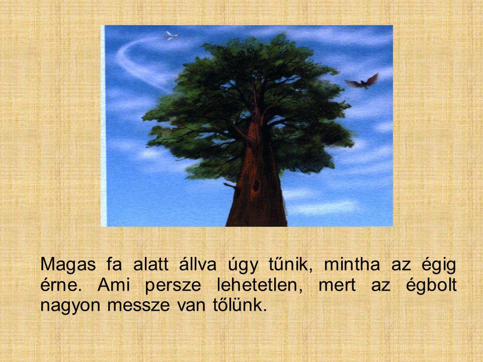 Magas fa alatt állva úgy tűnik, mintha az égig érne