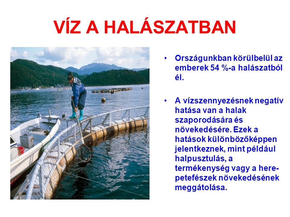 VÍZ A HALÁSZATBAN Országunkban körülbelül az emberek 54 %-a halászatból él.