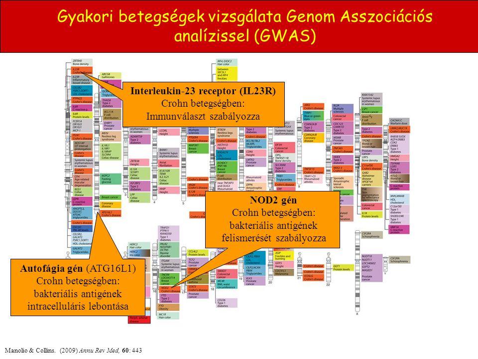 Gyakori betegségek vizsgálata Genom Asszociációs analízissel (GWAS)