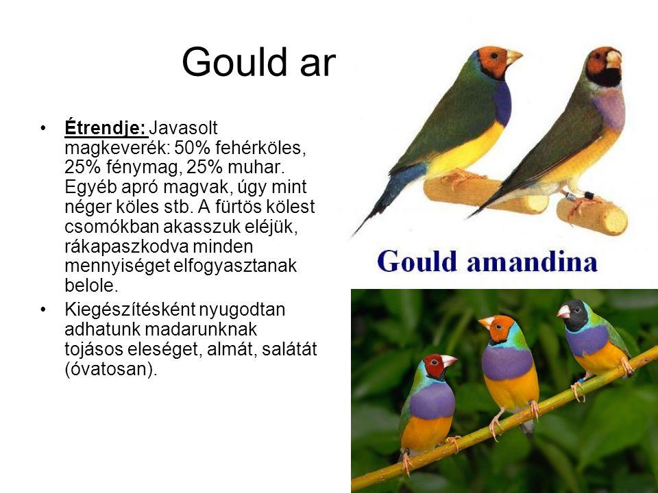 Gould amandina
