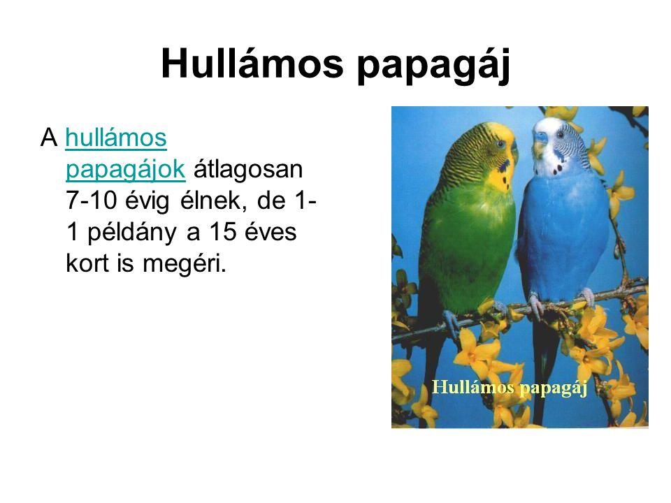 Hullámos papagáj A hullámos papagájok átlagosan 7-10 évig élnek, de 1-1 példány a 15 éves kort is megéri.