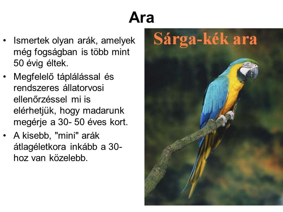 Ara Ismertek olyan arák, amelyek még fogságban is több mint 50 évig éltek.