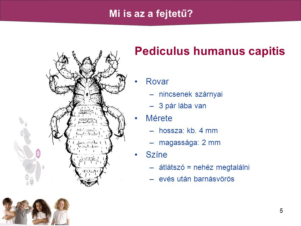 Pediculus humanus capitis