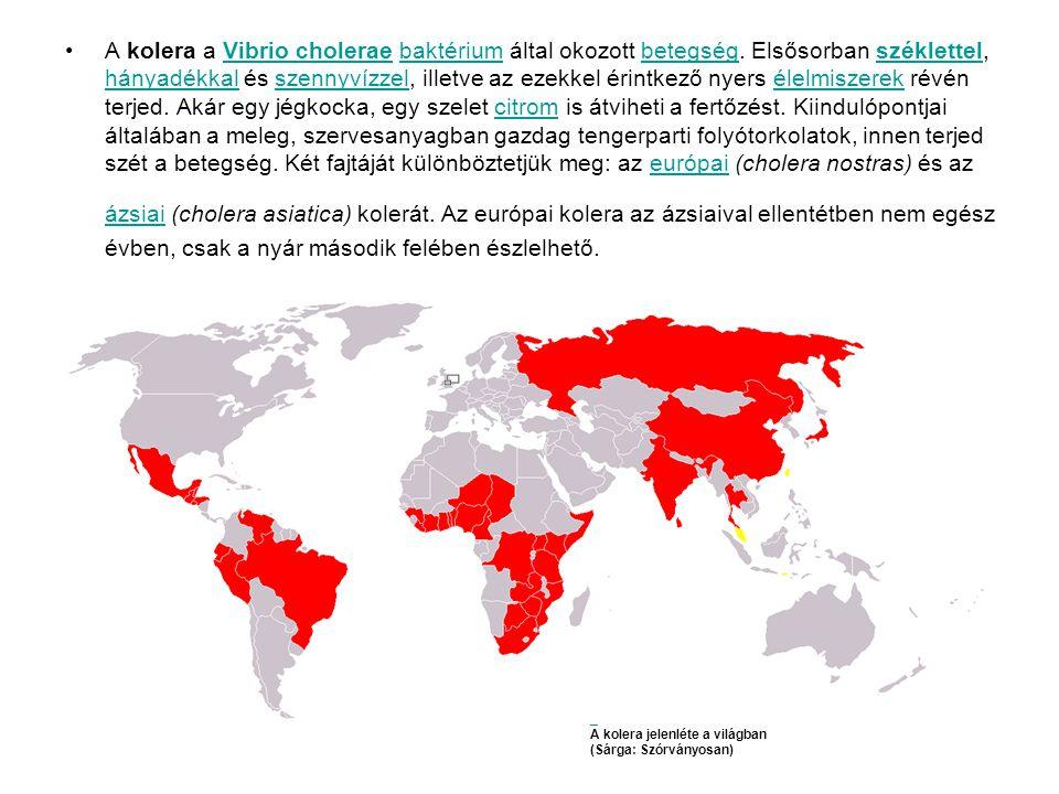 A kolera a Vibrio cholerae baktérium által okozott betegség