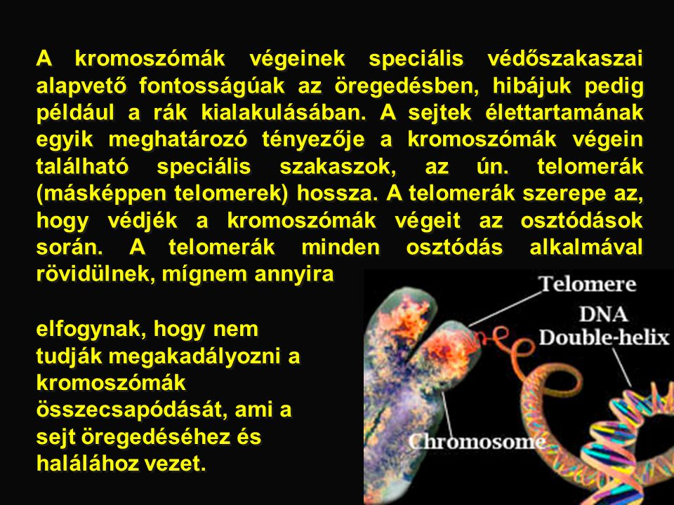 A kromoszómák végeinek speciális védőszakaszai alapvető fontosságúak az öregedésben, hibájuk pedig például a rák kialakulásában. A sejtek élettartamának egyik meghatározó tényezője a kromoszómák végein található speciális szakaszok, az ún. telomerák (másképpen telomerek) hossza. A telomerák szerepe az, hogy védjék a kromoszómák végeit az osztódások során. A telomerák minden osztódás alkalmával rövidülnek, mígnem annyira