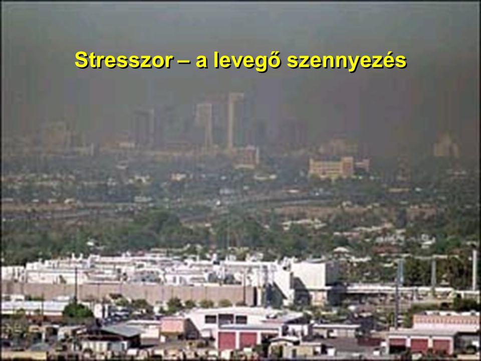 Stresszor – a levegő szennyezés