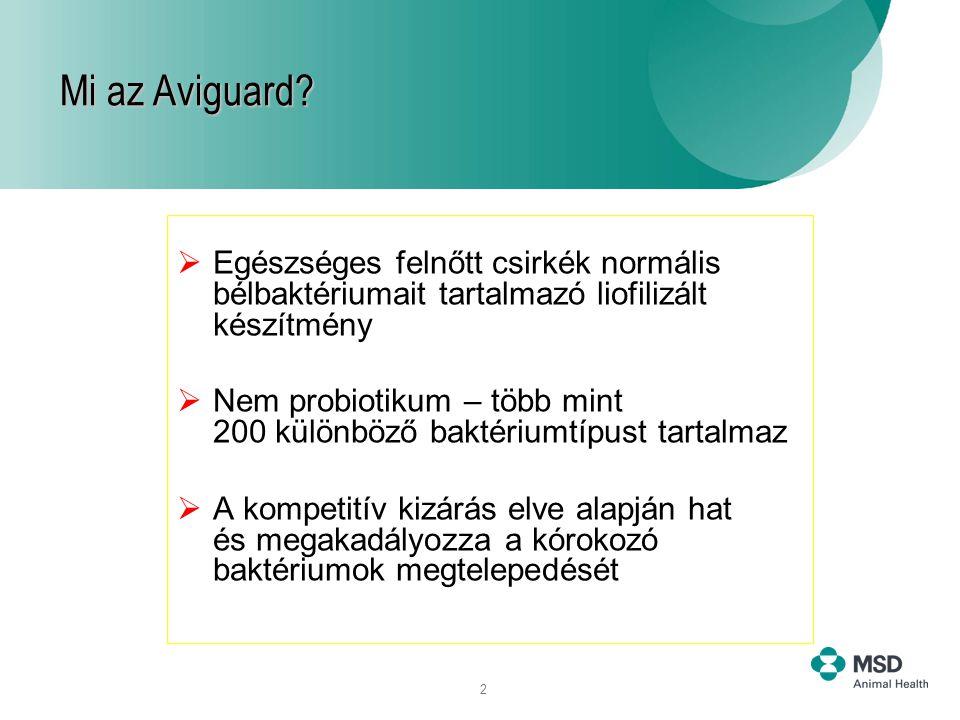 Mi az Aviguard Egészséges felnőtt csirkék normális bélbaktériumait tartalmazó liofilizált készítmény.