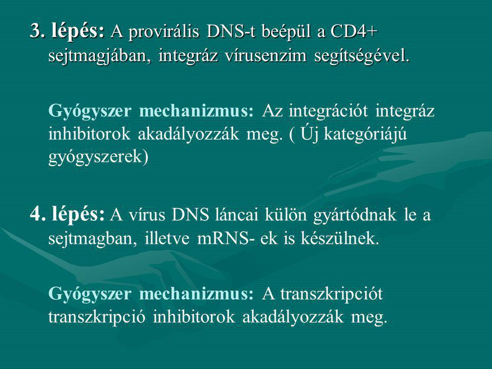 3. lépés: A provirális DNS-t beépül a CD4+ sejtmagjában, integráz vírusenzim segítségével.
