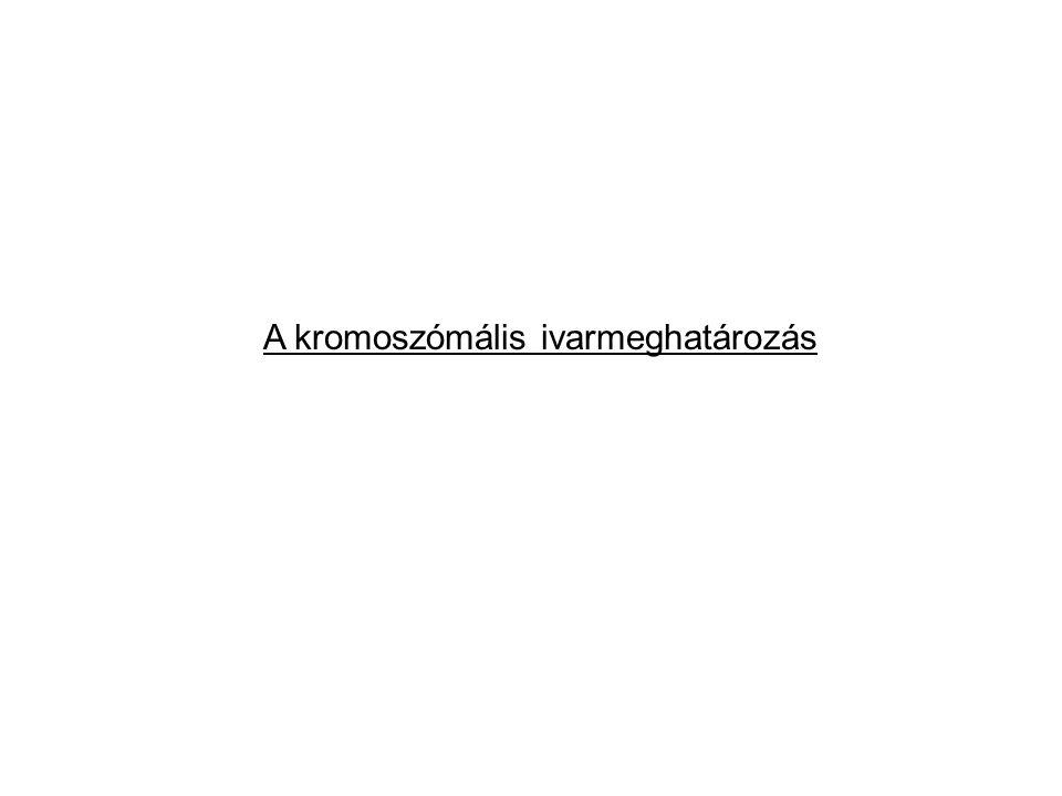 A kromoszómális ivarmeghatározás