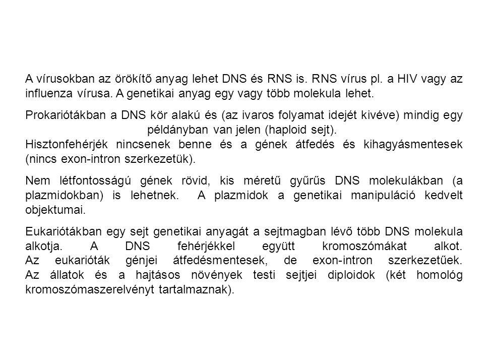 A vírusokban az örökítő anyag lehet DNS és RNS is. RNS vírus pl
