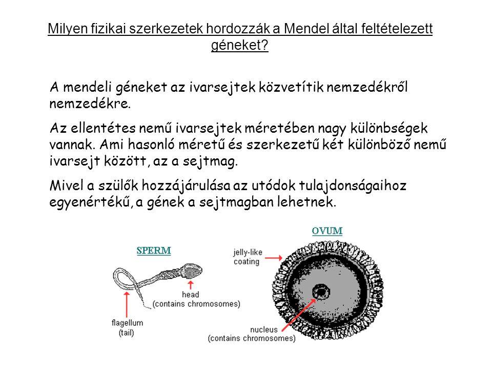 Milyen fizikai szerkezetek hordozzák a Mendel által feltételezett géneket