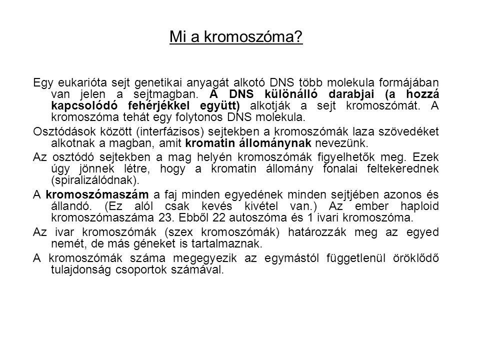 Mi a kromoszóma