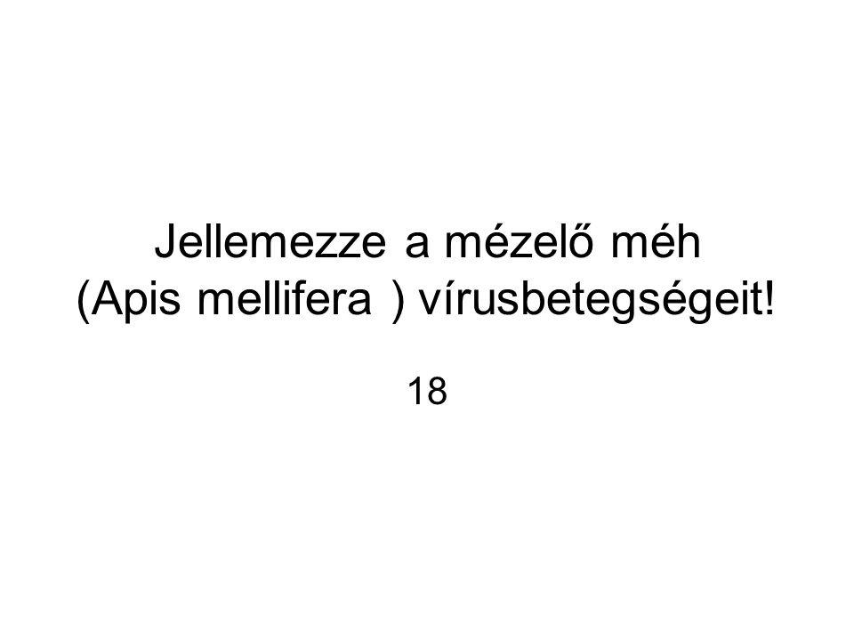 Jellemezze a mézelő méh (Apis mellifera ) vírusbetegségeit!