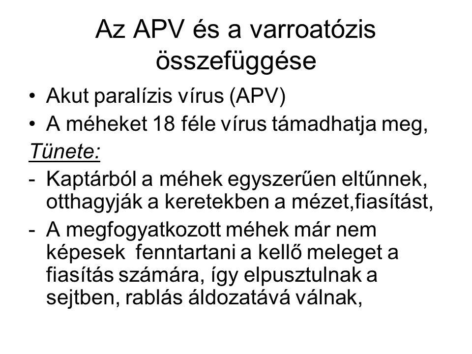 Az APV és a varroatózis összefüggése