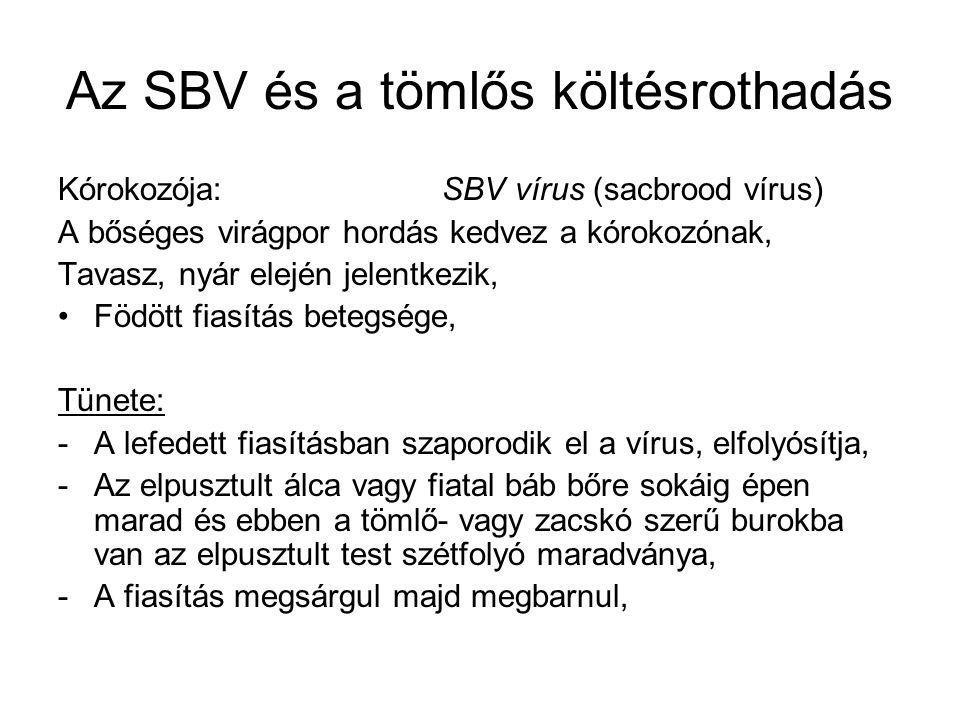 Az SBV és a tömlős költésrothadás