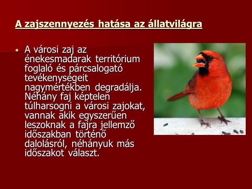 A zajszennyezés hatása az állatvilágra