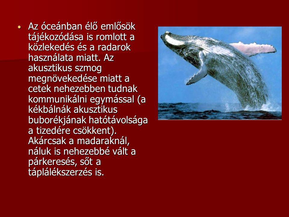 Az óceánban élő emlősök tájékozódása is romlott a közlekedés és a radarok használata miatt.
