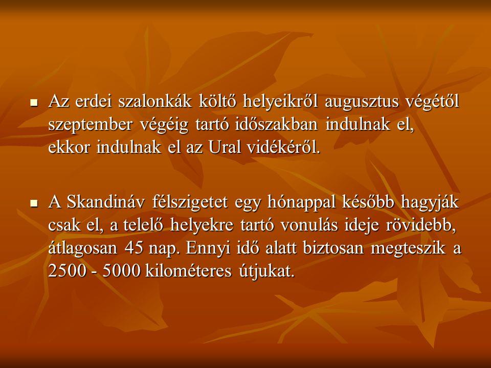 Az erdei szalonkák költő helyeikről augusztus végétől szeptember végéig tartó időszakban indulnak el, ekkor indulnak el az Ural vidékéről.