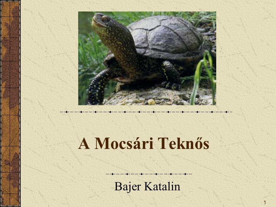A Mocsári Teknős Bajer Katalin