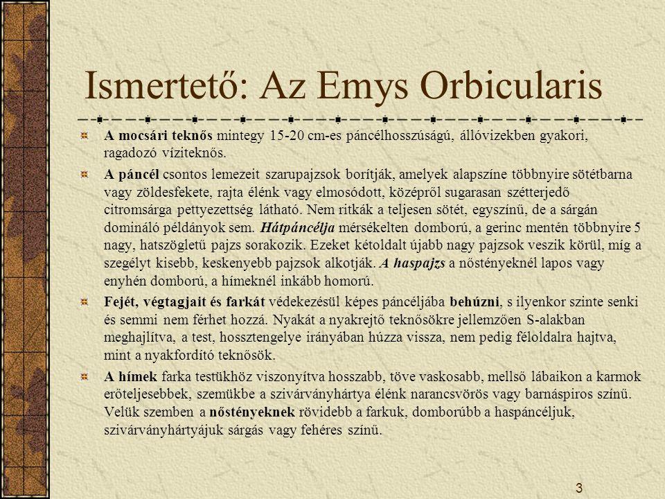 Ismertető: Az Emys Orbicularis