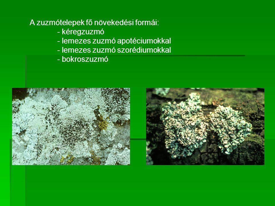 A zuzmótelepek fő növekedési formái: