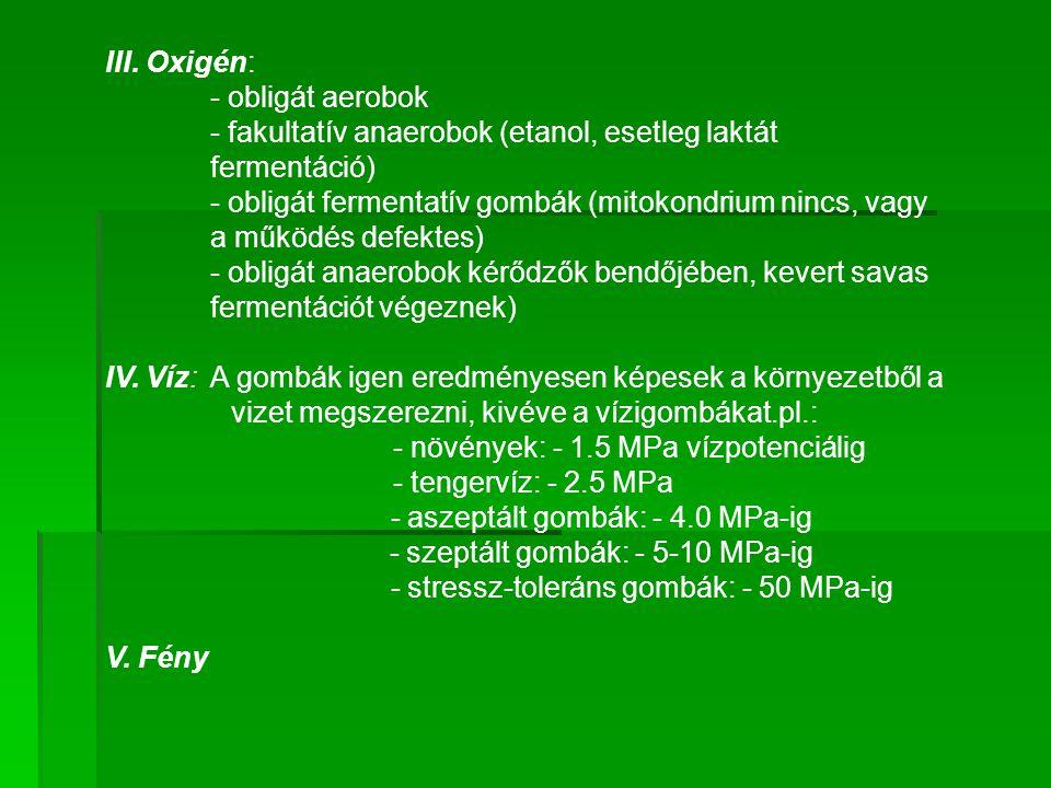 - fakultatív anaerobok (etanol, esetleg laktát fermentáció)
