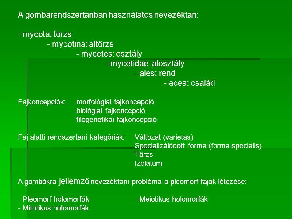 A gombarendszertanban használatos nevezéktan: - mycota: törzs