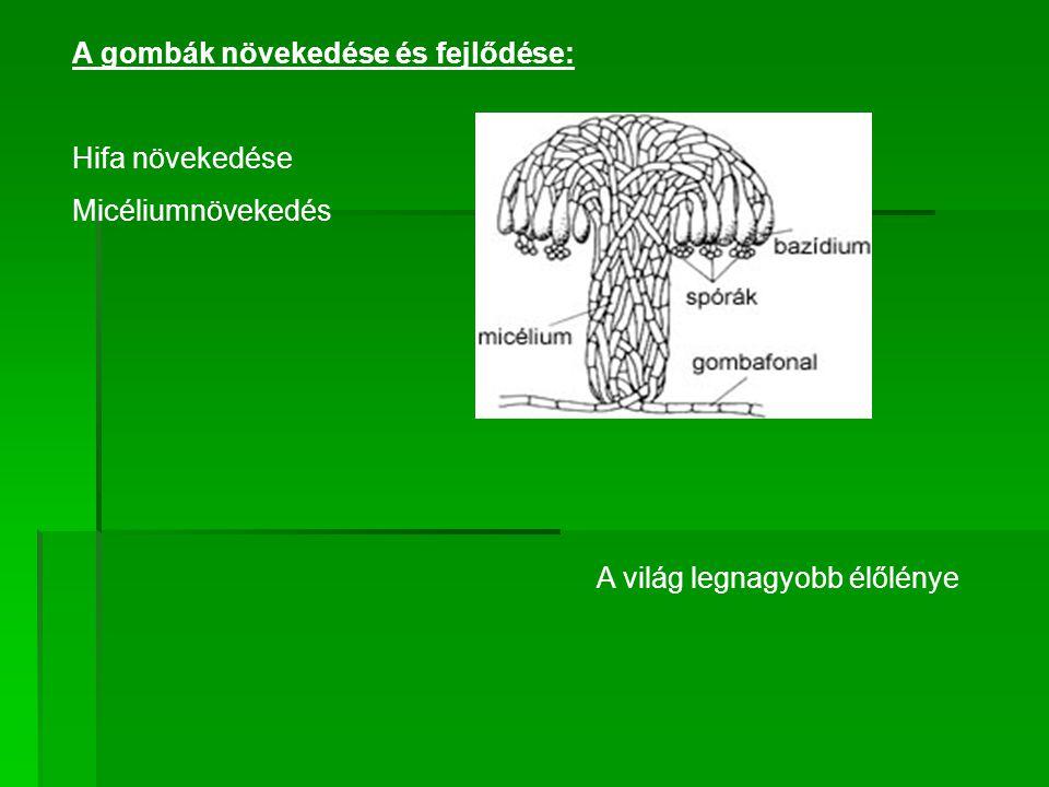 A gombák növekedése és fejlődése: